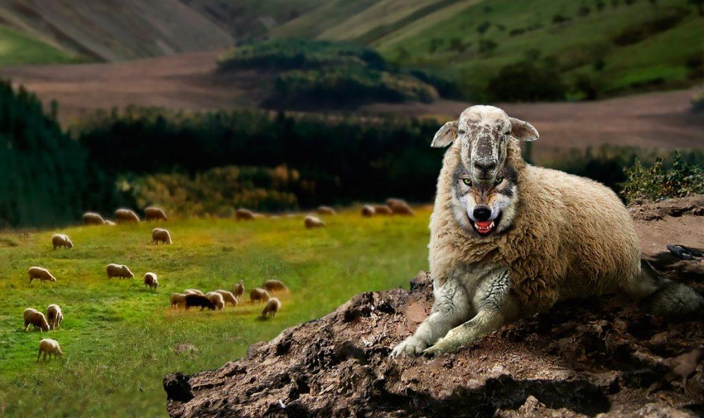 информации картинки волки овечка организациях ип