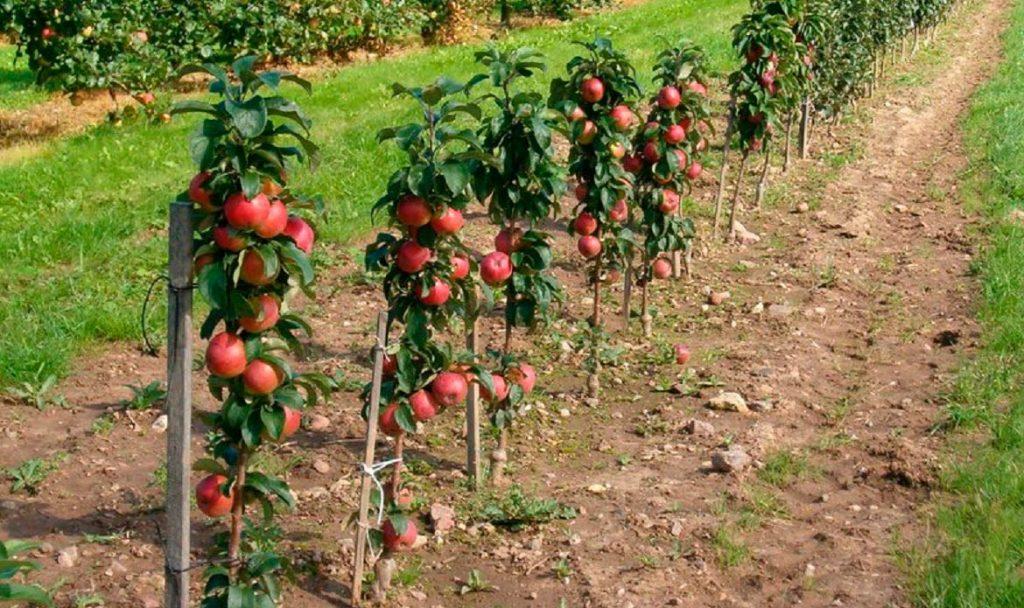 как правильно посадить фруктовый сад фото цвета, перенасыщенность квартиры
