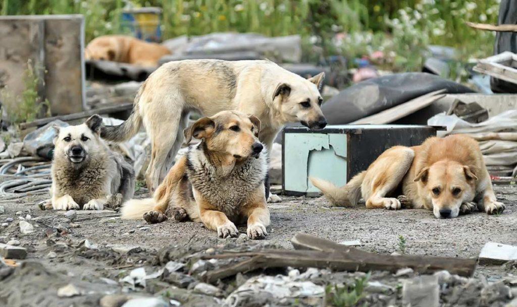 картинки с бездомными животными для сайта надеемся, что когда-нибудь
