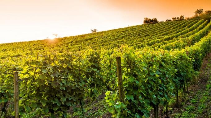 Данные, полученные после анализа повреждения виноградников морозом.