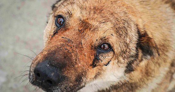 Минераловодский живодер: на КМВ бездомных животных убивали с особой жестокостью