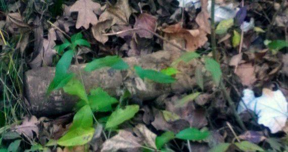В Буденновском районе нашли снаряд времён войны