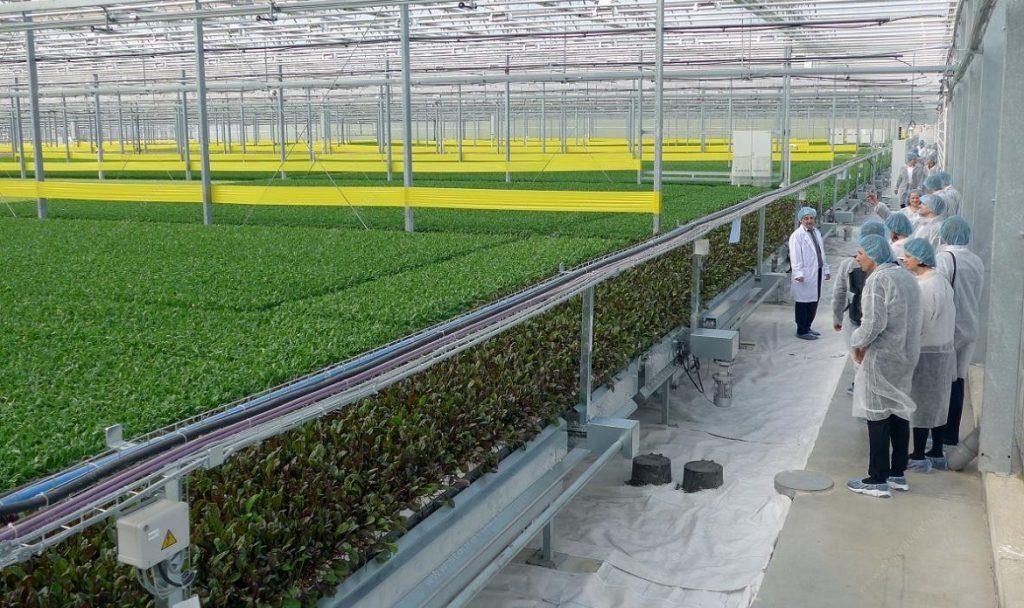 Ставрополье будет лидером попроизводству овощей закрытого грунта к 2020-ому году