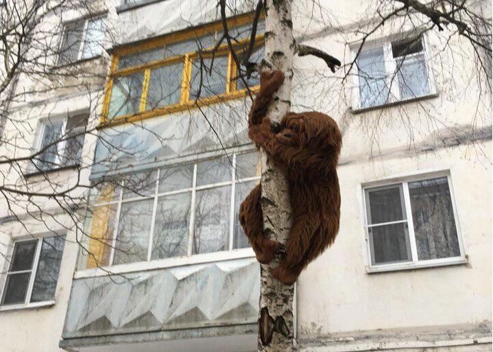 На дереве в Ставрополе висит ленивец