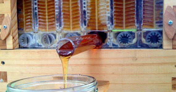 60 килограммов мёда, ульи и мебель украла у пасечника 32-летняя ставропольчанка