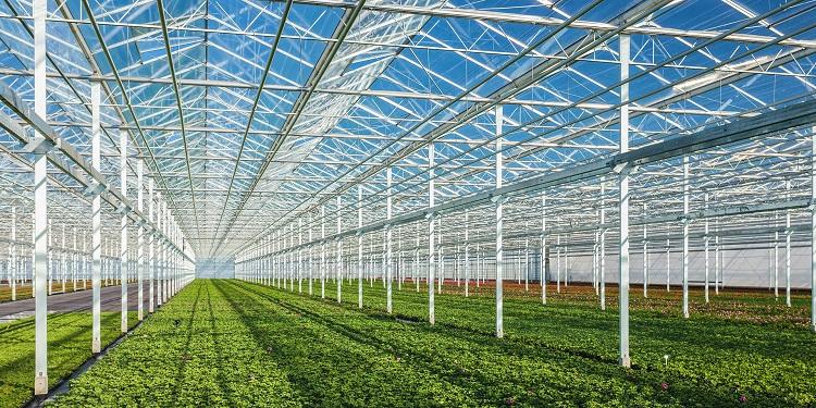 НаСтаврополье реализуют 5 больших инвестпроектов всфере АПК