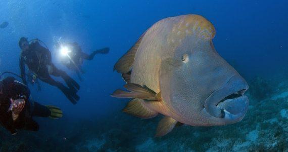 Редких обитателей океанических глубин покажут жителям Ставрополя