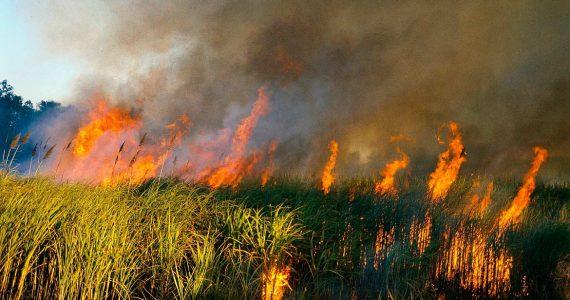 Чрезвычайную пожароопасность прогнозируют в 10 районах Ставропольского края