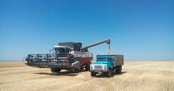 Аграрии 17 районов Ставропольского края начали уборку зерновых
