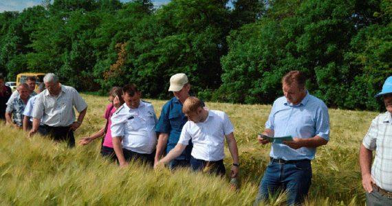На «День поля» в Александровском районе гостям показали опытные посевы гороха и чечевицы