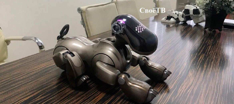 Собака с характером, панда-терапевт и Тесла-шоу. «Робополис»продолжает работу в Ставрополе