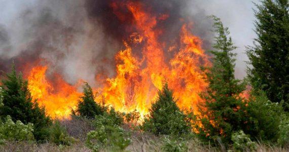 Чрезвычайная пожароопасность в Ставропольском крае. Телефоны экстренных служб и рекомендации жителям