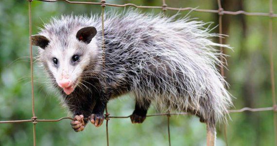 В зоопарке Ставрополя выявили нарушения содержания животных