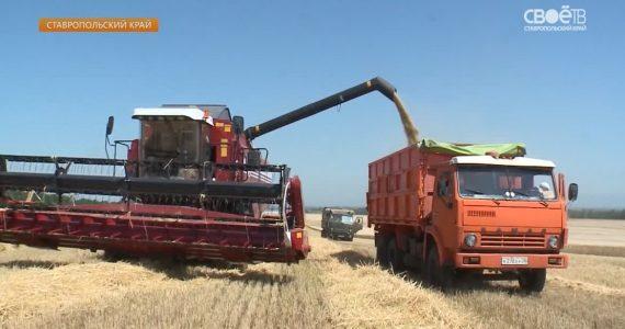 Аграрии Ставрополья вышли на финишную прямую