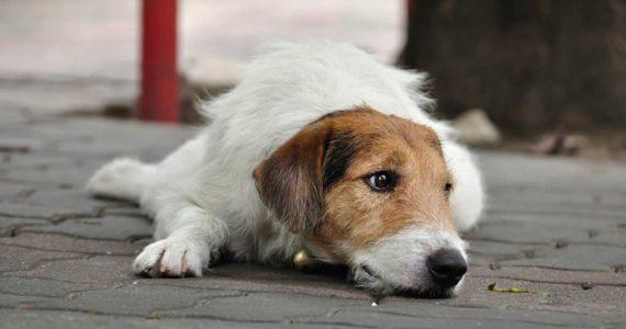 Без заявки не ловят. Прокуратура Ставрополя выявила нарушения в отлове собак