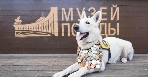 Нарисовать портрет фронтовой собаки предлагает ставропольским детям Московский Музей Победы
