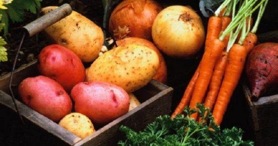 В Ставропольском крае аграрии убирают картофель в два раза быстрее, чем год назад
