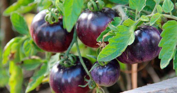 Меры поддержки садоводов и огородников разработали в Ставропольском крае