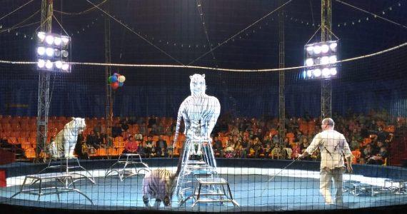 Подростки-преступники побывали в цирке Ставрополя