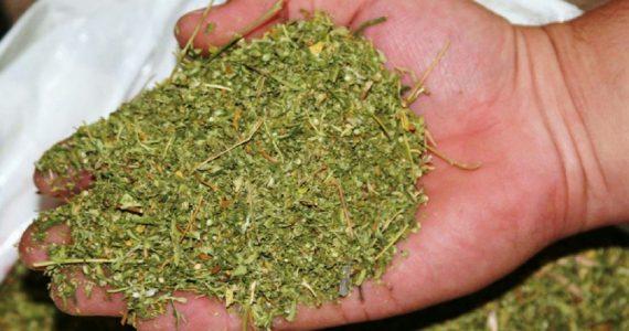 Полицейские изъяли марихуану у жителя Верхнерусского