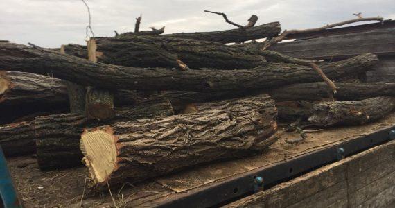 Жителя Шпаковского района застали за незаконной рубкой леса