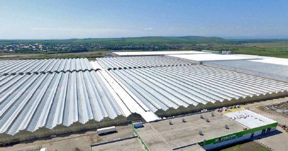 Новые помидорные теплицы построят в Солнечнодольске