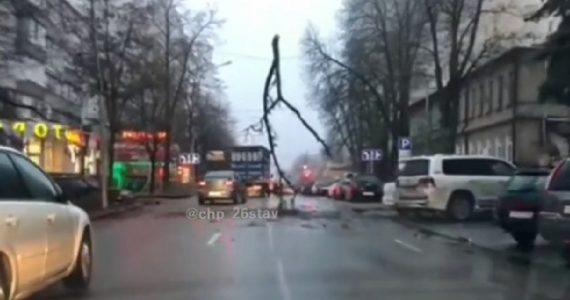 Четырёхметровая ветка застряла в проводах над дорогой Ставрополя