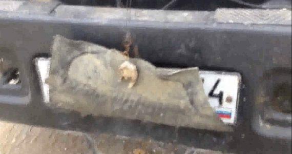 Водители на Ставрополье прячут номера под грязью и картонками