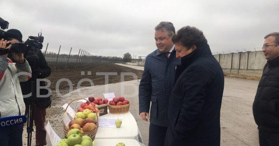 На Ставрополье растут площади суперинтенсивных яблоневых садов