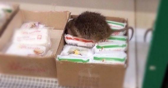 Ставрополец увидел крысу на прилавке супермаркета