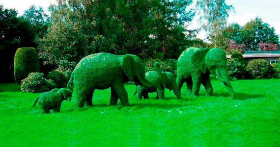 В Железноводске появится 13 зелёных скульптур