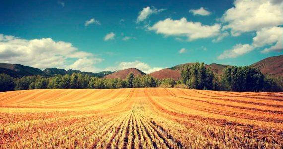 На Ставрополье увеличат поддержку сельских территорий