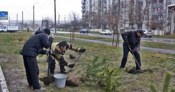 Житель Невинномысска высадил у дома 100 деревьев
