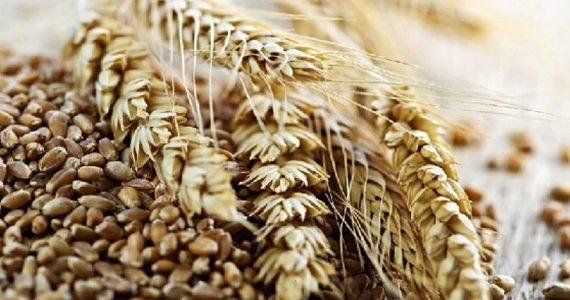 Около 5 миллионов тоннставропольского зерна отправляется на экспорт